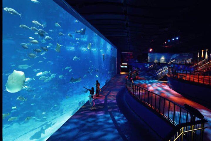 S.E.A. Aquarium's Deep Boo Sea
