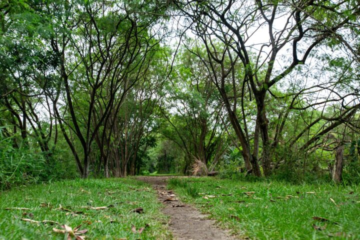 Guess The Hydeout Beautiful Nature Spots In Singapore Youthopia