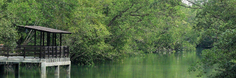Fun with Mangrove Wildlife Online Workshop